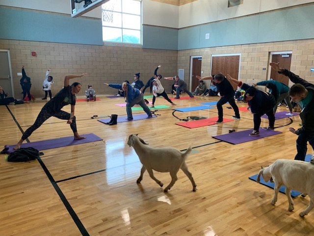 Goat Yoga Mindfulness Activity...coming Feb. 27th